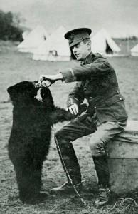 Niedźwiedzica Winnie